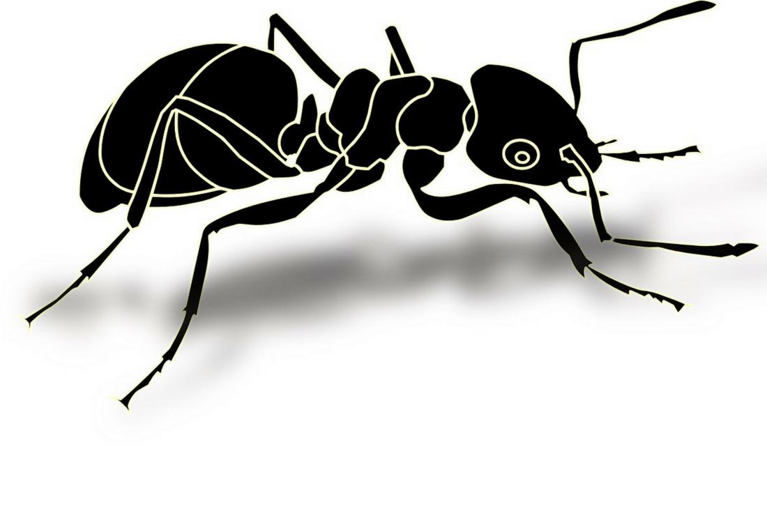 Se débarrasser des fourmis en rez-de-chaussée